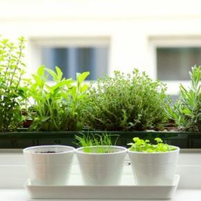Βότανα στο μπαλκόνι / KitchenGardening