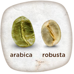 arabica_vs_robusta2_960
