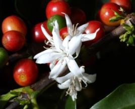 flower-fruits