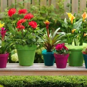 Πως να φυτέψετε λουλούδια της άνοιξης- Αρχάριοι / Easy planting in 4steps