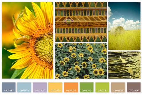 SS-2013-Sunflowers