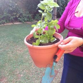 Σήμερα φύτεψα βασιλικό! How to… με 3 απλά βήματα /Basil planting: in threesteps