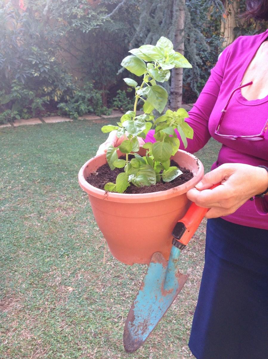 Σήμερα φύτεψα βασιλικό! How to... με 3 απλά βήματα /Basil planting: in three steps