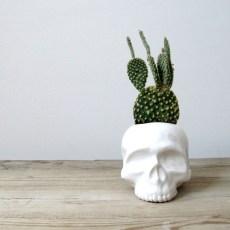 ceramic skull pot, 32 euro
