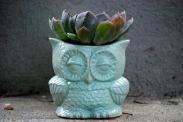 vintage ceramic owl pot, 26 euro