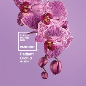 Pantone : To χρώμα της χρονιάς2014