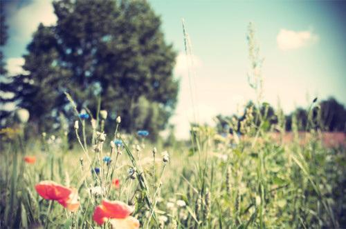 flowers-via-pinterest