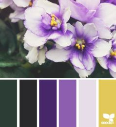 purple-yellow-pal2