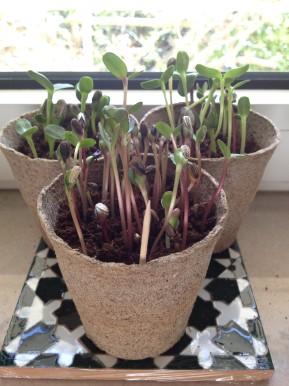 Κιτ για τους αρχάριους της κηπουρικής!/ Gardening kit for the boringdays