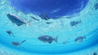 fish-underwater_00410511