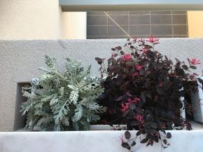 Η ιστορία μιας ζαρντινιέρας που αντιμετώπισε τις μελίγκρες οικολογικά/ Colourful windowbox