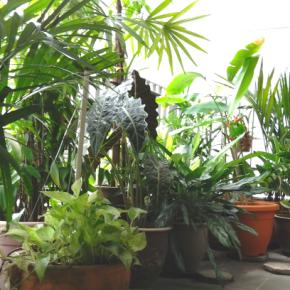 Πότισμα φυτών – 3 τρόποι να το κάνετεοικολογικά